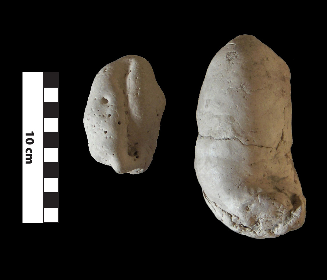 Coprolites (possibly crocodile)