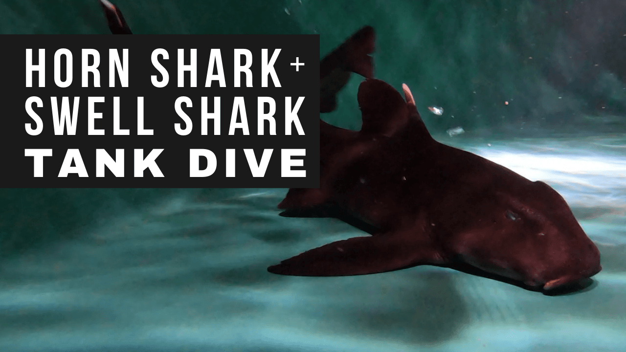 Shark Tank Dive Opens in new window